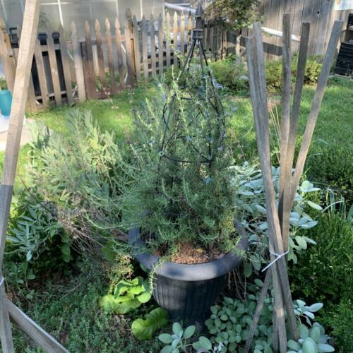 The herbal parterre in Summer 2021