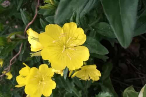 flowers_feat_480x320